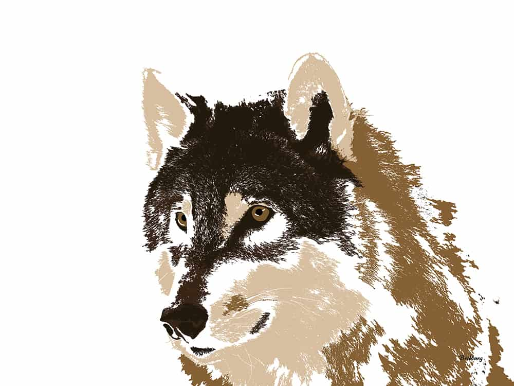 wolf canine